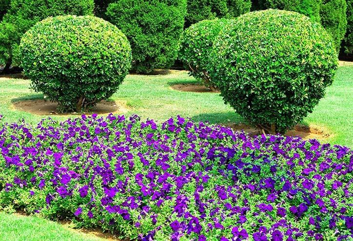 Araucaria paysagiste tr chy pr s d 39 tampes dans l for Entretien jardin essonne
